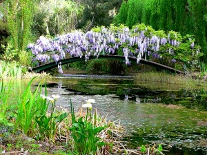 Monet Bridge in spring 2001