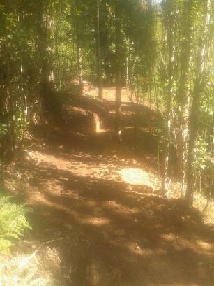 Poplar Path